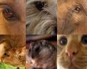 Imagem de Pelos direitos dos animais