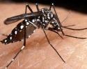 Imagem de Verão exige cuidados com a dengue