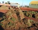 Imagem de Campos começam a ser gramados