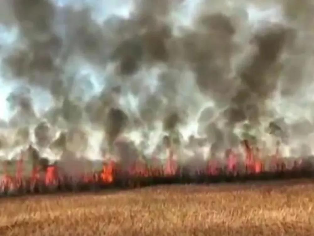 Imagem de Incêndio destrói cerca de 30 hectares de plantação de cana-de-açúcar, em Rio Verde