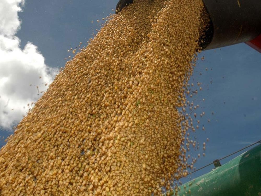 Imagem de Preço da soja cai até R$ 2 no Brasil com quedas no dólar e em Chicago